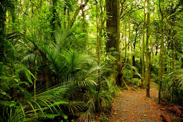 Amazon rainforest  Wikipedia
